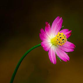by Jali Razali - Nature Up Close Flowers - 2011-2013 (  )