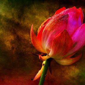 Textured Lotus by Rohit Chawla - Digital Art Things ( macro, lotus, texture, kashmir, cosurvivor, india, flower )