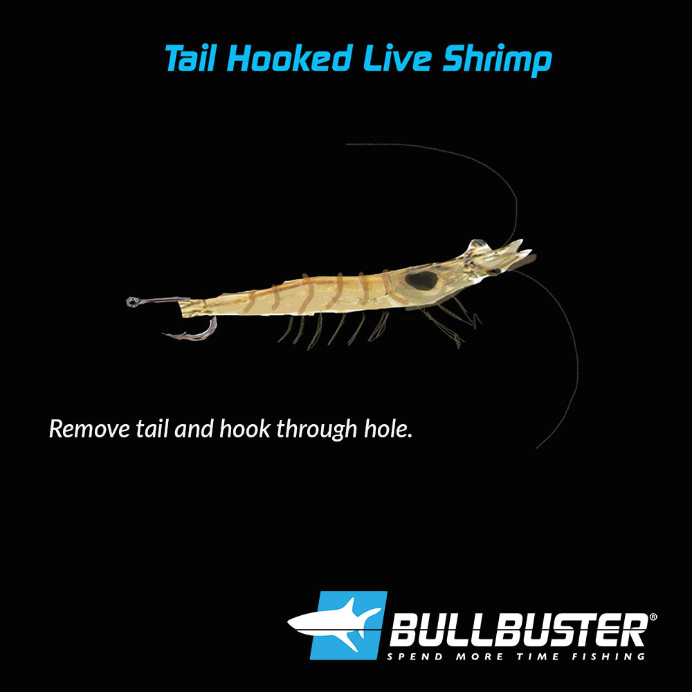 Hooking Live Shrimp In The Tail