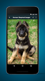 German Shepherd Dog Images- screenshot thumbnail