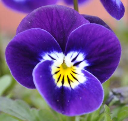 Fiore... di fabi86