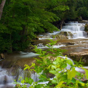 Falling through the Trees by Dave Files - Landscapes Waterscapes ( water, stream, waterfall, forest, rocks )