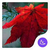 Maple leaf-APUS Launcher theme