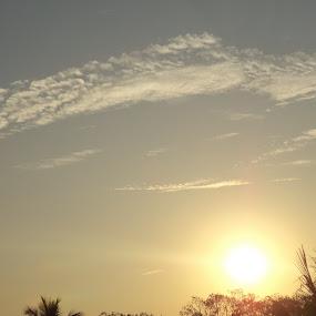 Sunset. by Karthish Waran - Landscapes Sunsets & Sunrises ( clouds, blazing, coconut, tree, sunset )