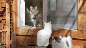Cats in Isolation thumbnail
