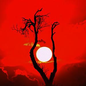 tree snst manipulated  vert.jpg