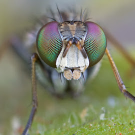Colourful Eyes by Louis Pretorius - Animals Insects & Spiders