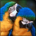 Brazil Birds Game & Wallpapers