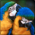 Brazil Birds Game & Wallpapers icon