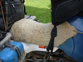 Photo: Gemütliches Schaffell aus Neuseeland