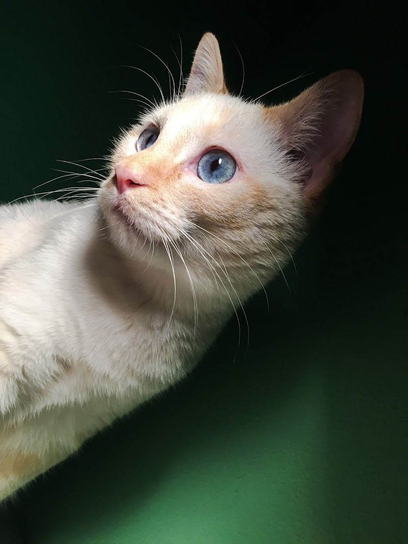 Non è possibile possedere un gatto al massimo si può essere con loro soci alla pari... di M47OH