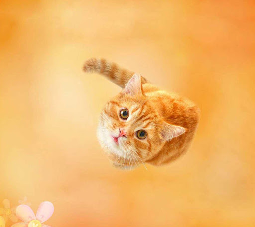 【免費工具App】Baby Cat Wallpaper-APP點子