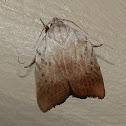 Wingia Moth