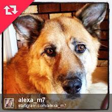 Photo: A friend's dog portrait #intercer #dog #pet #pretty #k9 #brown #dogsofinstagram #cute #adorable #precious #pet #pets #dogsofinstagram #ilovemydog #instagramdogs #animal #animals #petstagram #picpets #cutie #life #doggy #dogoftheday - via Instagram, http://instagr.am/p/WhL6dlJfiZ/