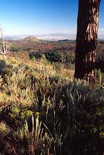 Photo: Old burn, Bandalier National Monument, New Mexico