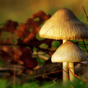 by Thomas Renner - Nature Up Close Mushrooms & Fungi