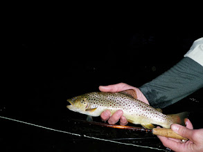 Photo: Brown Trout on a fly in Ohio- Mad River Outfitters