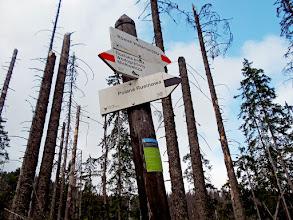Photo: A Sas út egykori kiindulópontja, a népszerű Wołoszyn-rét a turistaút lezárásával felületének nagy részét elveszítette, mára benőtte az erdő. Fotó: portaltatrzanski.com