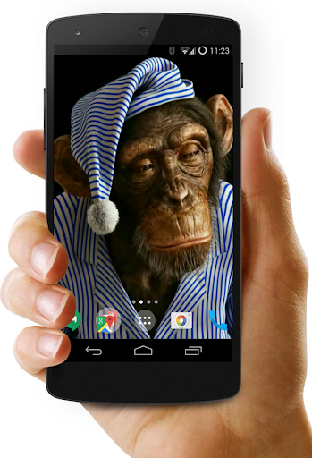 Funny Monkeys Live Wallpaper
