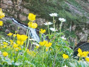 Photo: Cascade et fleurs de montagne sur l'Obaga de Barrecul
