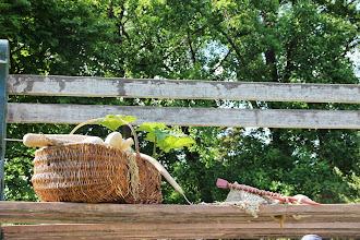 Photo: {1. Mimétisme ou imitation : l'avis des plantes} Le banc géant (Ouiiii, le géant tricote !)