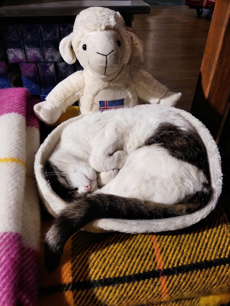 Sleeping cat di Fenice