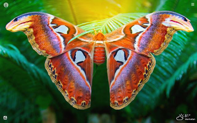 Moths HD Wallpapers New Tab Theme