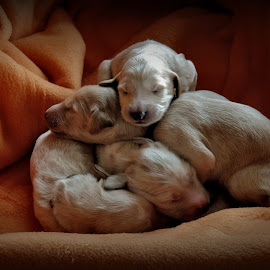 by Clare Draper - Animals - Dogs Puppies