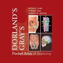 Pocket Atlas of Anatomy TR icon