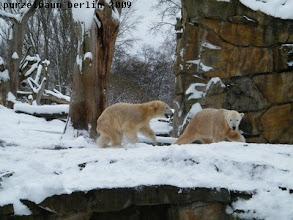 Photo: Knut und Gianna jagen ausgelassen ueber die Anlage :-)