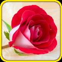 Rose Love Wallpaper icon