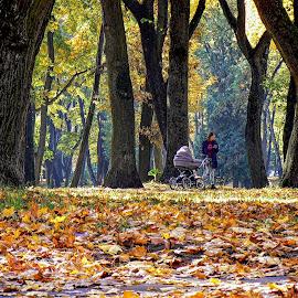 09 by Vygintas Domanskis - City,  Street & Park  City Parks ( city park, mom, autumn, trees, colors,  )