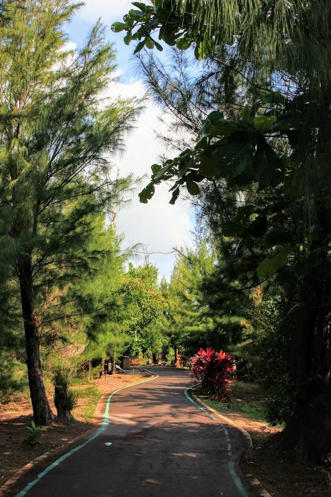 路是真的平緩,且樹木高聳,都有遮陽效果