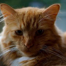 cat by Kim Moeller Kjaer - Animals - Cats Portraits