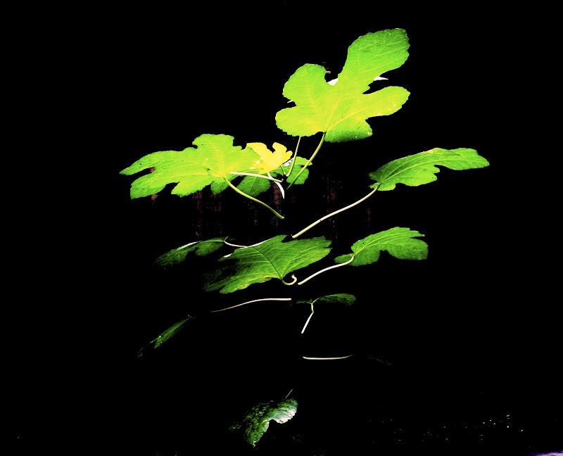 Luce.. vita per la natura.. di alansa