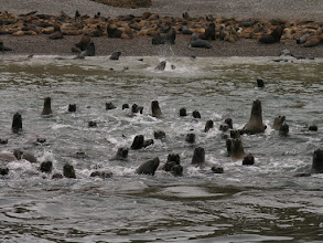Photo: More sea lions; there were thousands