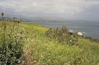 Photo: Wildflowers at Lake Kinneret