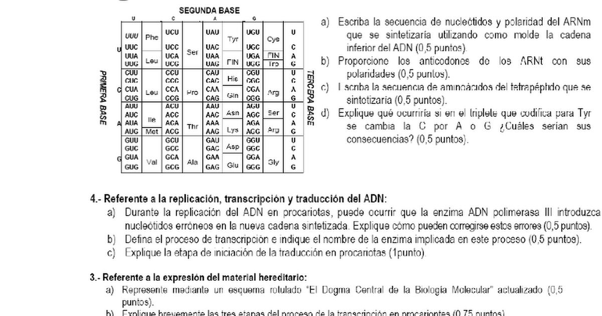 Ejercicios Dcbm Transcrición Y Traduccióndoc Google Drive