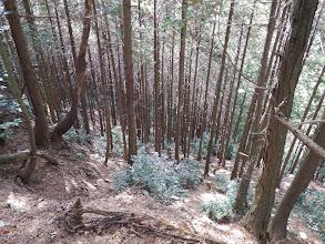 右下に植林帯の迂回路が…