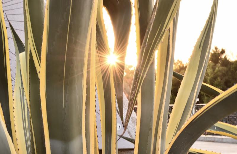 Un raggio di sole di S_H_A_N
