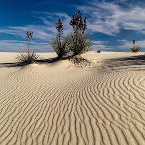 Yuccas in White Sand by Bonnie Davidson - Landscapes Travel ( sand, blue sky, photograph, white sands national monument, ripples, plants, yuccas, landscape, new mexico,  )