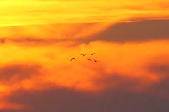 Photo: volando a casa
