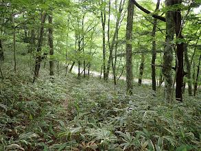 林道が見えてきた