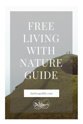 Your free Living with Nature guide by The Foraged Life | Kindle a connection with nature & see the positive impact on your wellbeing