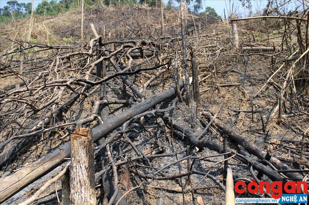 Hơn 3,7 ha rừng bị phá là rừng hỗn giao (tre, nứa, gỗ tự nhiên, núi đất...)