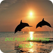 Relaxing Meditation Music : Dolphin Sounds