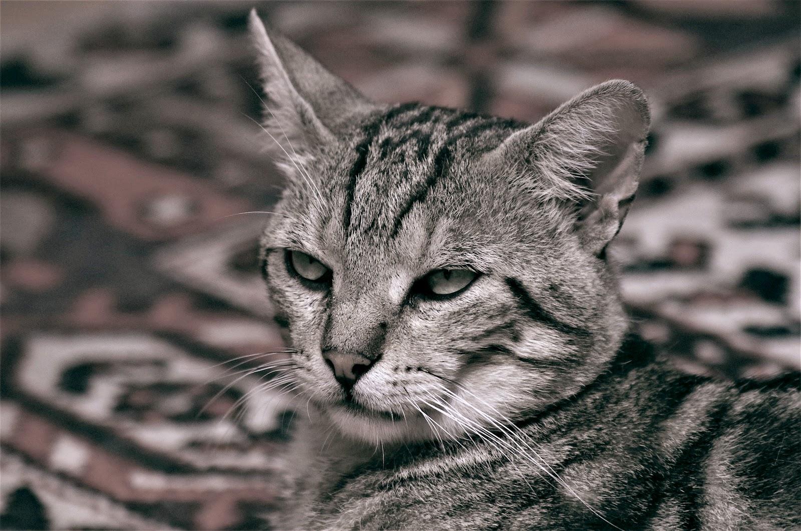 Gatto con sguardo tra lo schifato e il perplesso