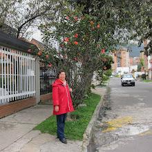 Photo: Smukke blomster - både på træet og på fortovet