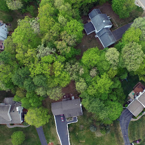 Looking Down at the World by Greg Glassman - Landscapes Forests ( houses, trees, aerial )