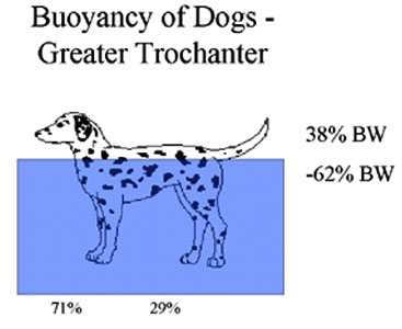 This figure indicates the degree of buoyancy obtained when the water is level with the greater trochanter of the femur